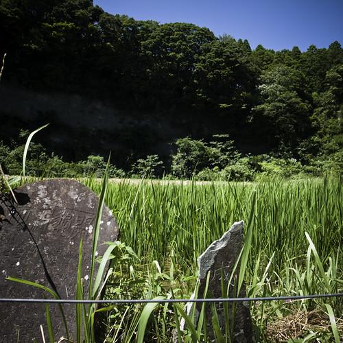 Rice Paddy with Narita Memeorial Yoroukeikoku, Chiba
