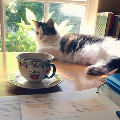 These days it feels like Evey and I just drink tea and study French. (I assume right now Ponder is in John's office helping him write his paper.)