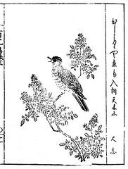 Heavenly bamboo and brown-eared bulbul