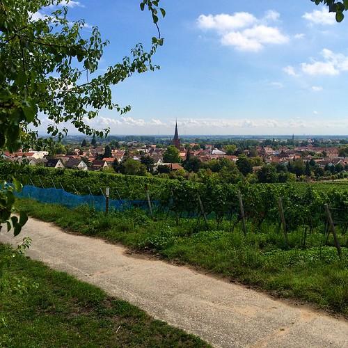 <3 deidesheim #zumwohldiepfalz #latergram
