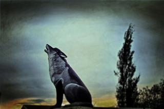 Spiritwood's Wolf