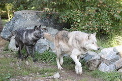 Wolf Charmer posted a photo: