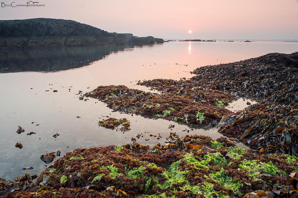 sunrise anglesey seaweed sea
