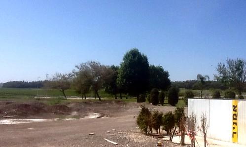 tree hills cedar holyland biblical biblicalnaturepreservebiblevalleycypressviewtree