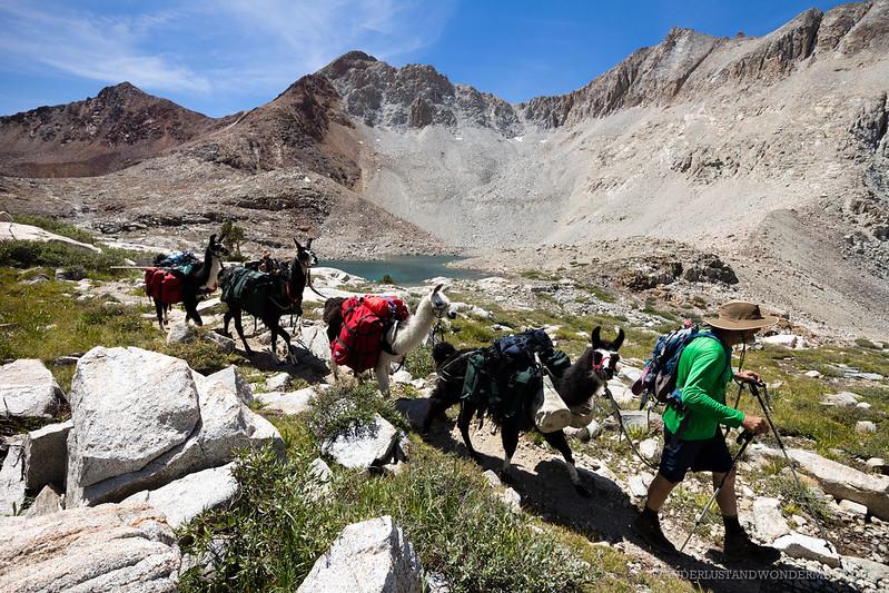 Lammas in the Sierras