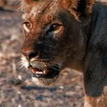 Chobe National Park_Botswana