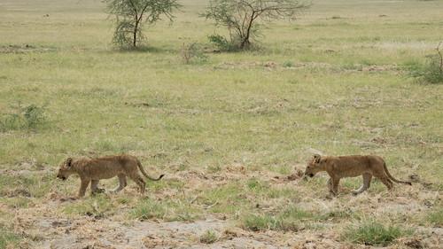 tanzania tansania afica afrika safari animal animals tier tiere wildlife nature natur