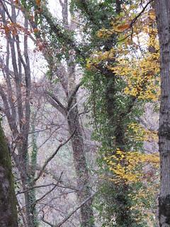 Forest near Tirana