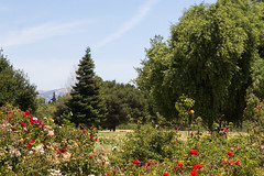 Heritage Rose Garden, San Jose