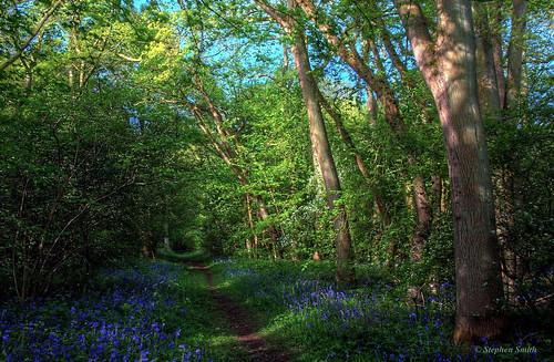 wood uk trees england nature bluebells woodland landscape spring woods nikon scenery northamptonshire may hdr bluebellwoods 2014 southwick woodlandpath d80 shortwood