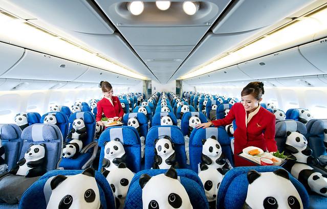 The 1600 pandas enjoying their flight to Hong Kong