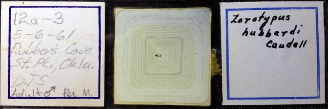 slide-mounted insect obscured by improper preservation