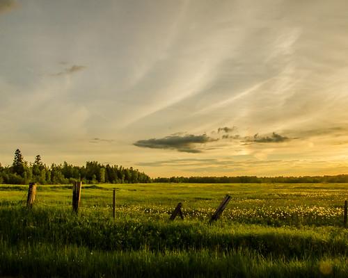 light sunset summer usa green nature beautiful wisconsin landscape gold woods nikon bright vibrant vivid fields lightfantastic 18105 d7000 nikond7000