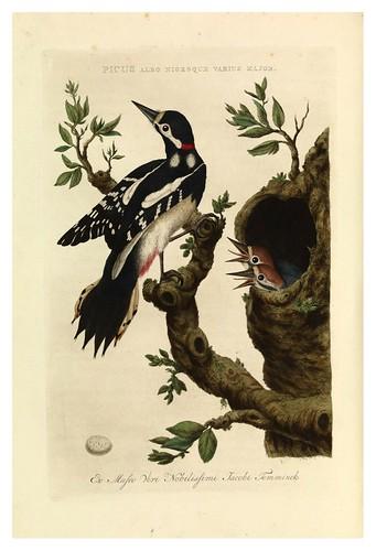 017-Picapinos- Nederlandsche vogelen- Nationale bibliotheek van Nederland