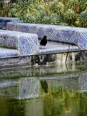 Le Merle du Petit Palais