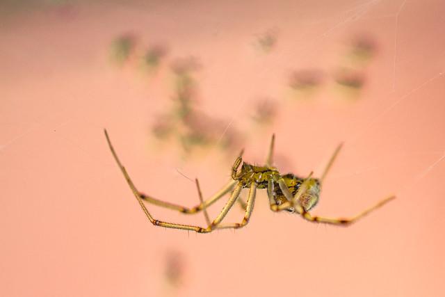 [139] Itsy Bitsy Spiderfamily