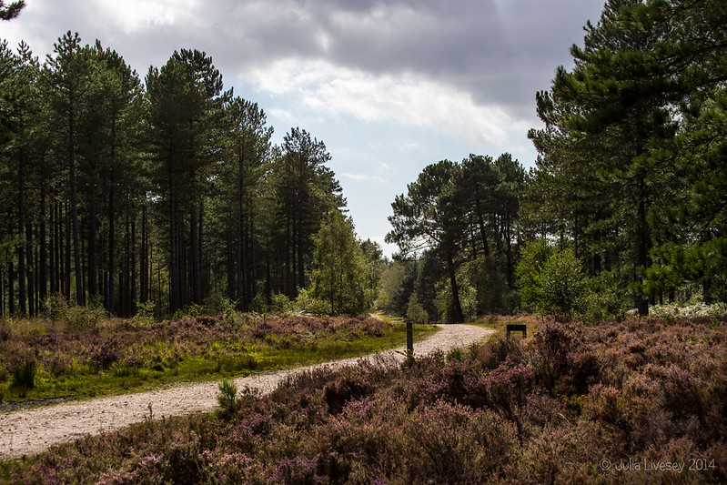 Wareham Forest