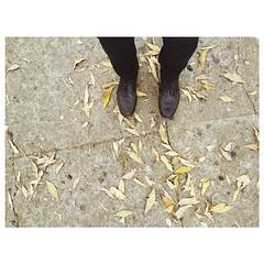 """""""Há sempre uma escolha,  há sempre um caminho que as folhas do chão vão me indicar...""""  #BomDia #100happydays #25days #Quotes"""