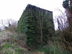 GOC Ashwell 082: Ivy-covered house