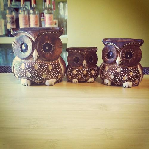 green owl owls!