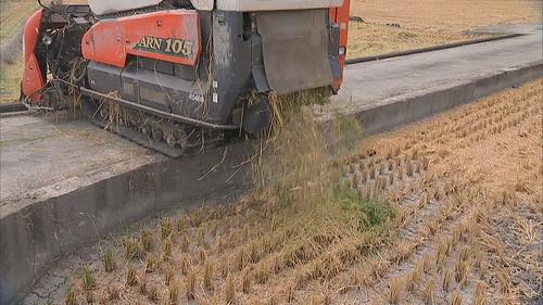 台中區農改場也研發新款菌肥
