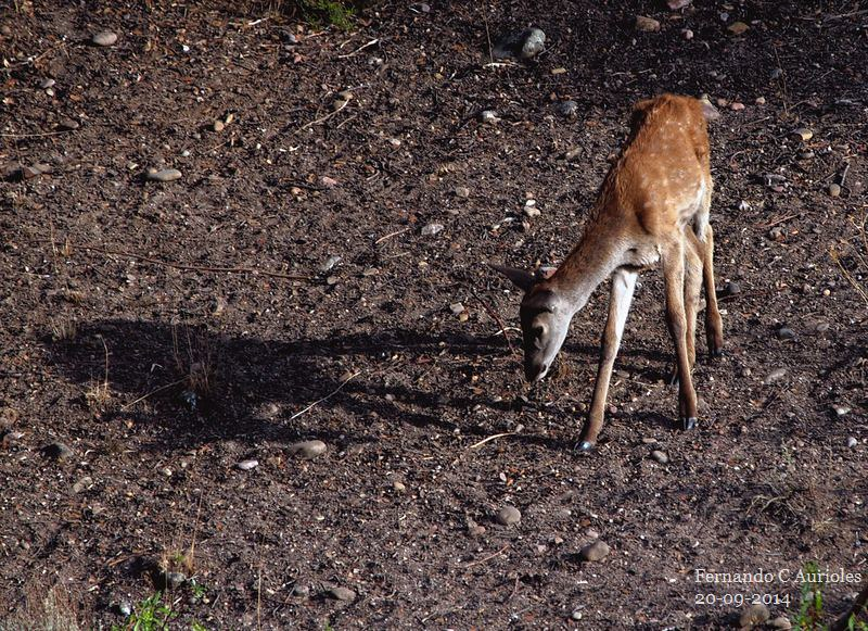 La sombra de Bambi 15115898540_506389c093_c