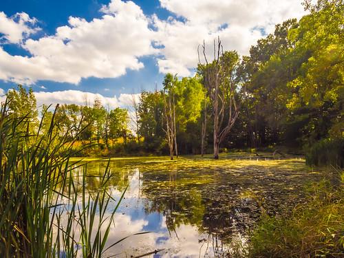 Kesling Wetland