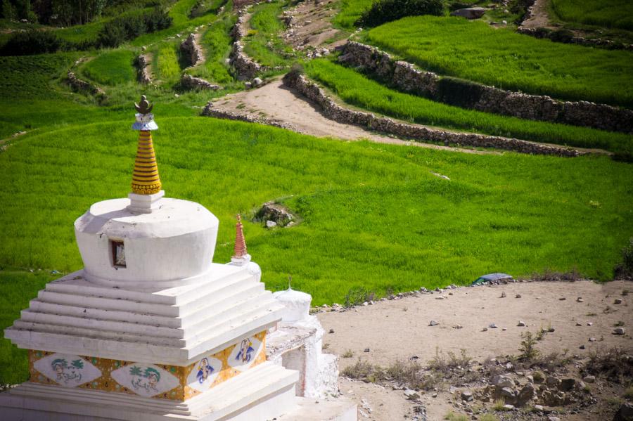 Чортены и поля внизу гомпы. Монастыри Ладакха (Монастыри малого Тибета) © Kartzon Dream - авторские путешествия, авторские туры в Ладакх, тревел фото, тревел видео, фототуры