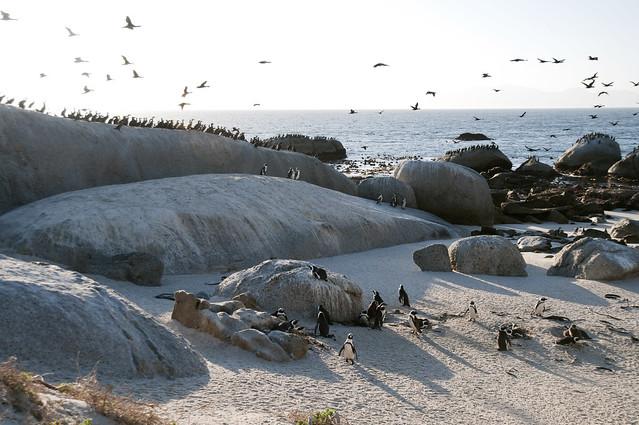 5 Gründe sich auf Südafrika zu freuen