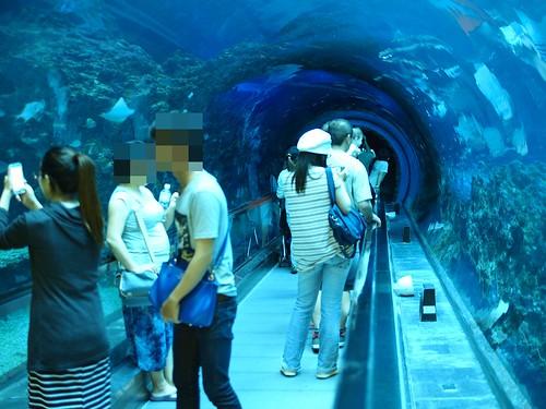 國立海洋生物博物館9