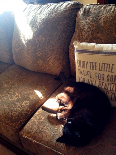 miss kitty meow in the sunlight on the couch