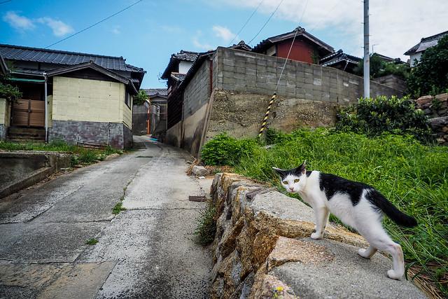Island Cat #13