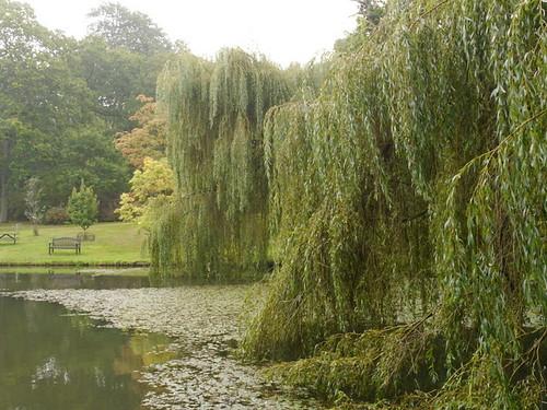 Jubilee Pond (2)