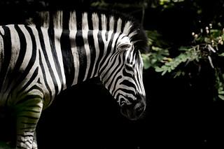 Zoo Cali-265