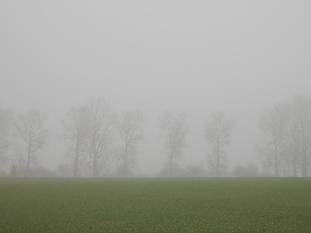 Trees in the fog Harlington Circular