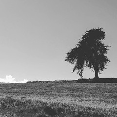 Being alone and being lonely are two different things #phonephotography #outdoorphotography #teampixel #shotbypixel #blackandwhite #insideooutside #inspiration #beautiful #life #tree #field #watsonville #driving #search #clouds #jemthecrow