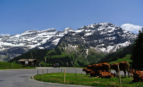 mountains alps schweiz switzerland cows pass berge alpen kati kühe motorradtour lesdiablerets waadt passstrase ormontdessus nikon1v1