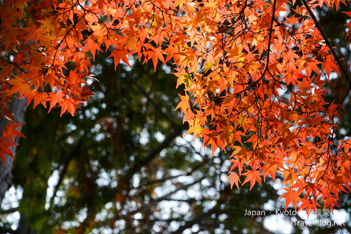 京都 东福寺13