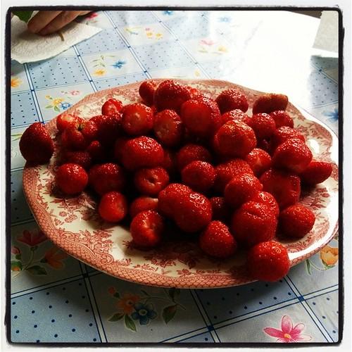 Enklast möjliga jordgubbstårta. Tillsätt vispad grädde. :) #Kolari