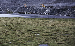 黃河發源地採煤 青海高原生態最大危機