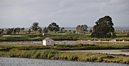 portugal paisagem aveiro landscap