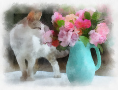 Cats & flowers