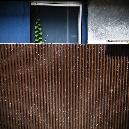 One Vine Strong with Corrugated Metal, Kita Senju, Tokyo