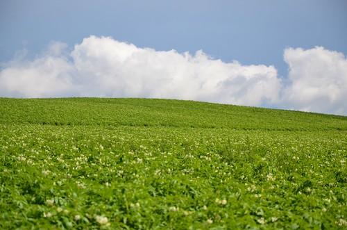 field farm maine potato grandisle 2014 afsdxvrzoomnikkor18105mmf3556ged august2014