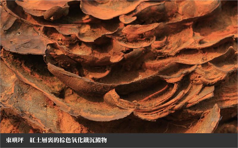 東嶼坪紅土層裏的棕色氧化鐵沉澱物