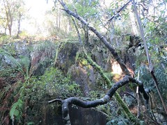 2014-08-10 Lilydale Falls 065 - Cliff