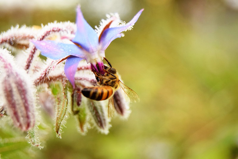 mehiläiset, sumuu, shopping 219