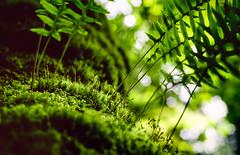 Moss & Ferns