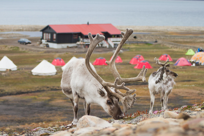RelaxedPace00834_Svalbard7D4511