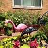 A new flamingo has joined the flock. #flamingos #garden #oklamingo